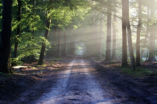 road-sun-rays-path-medium