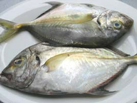 Talakitok or Trevally